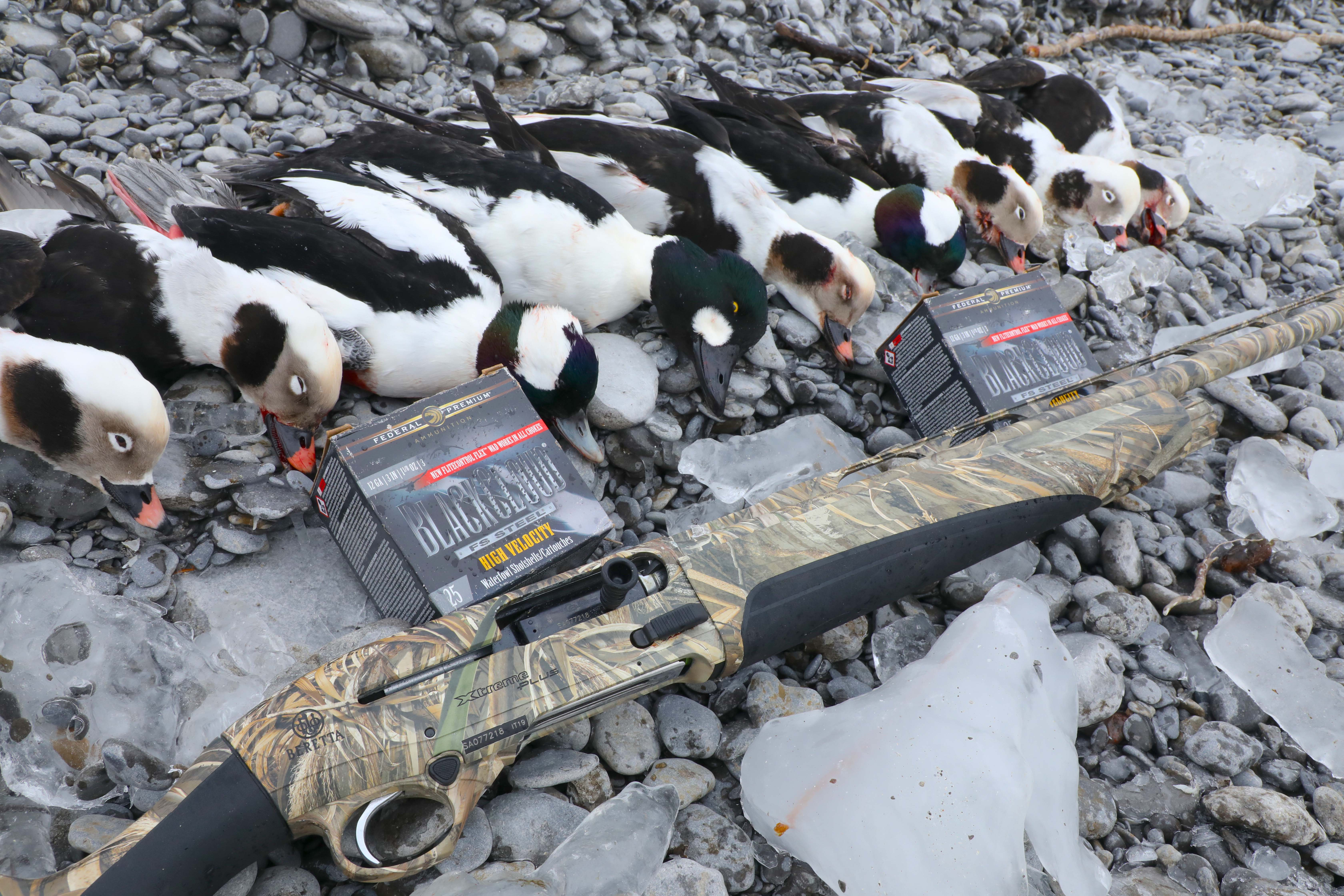 dead loons with a beretta