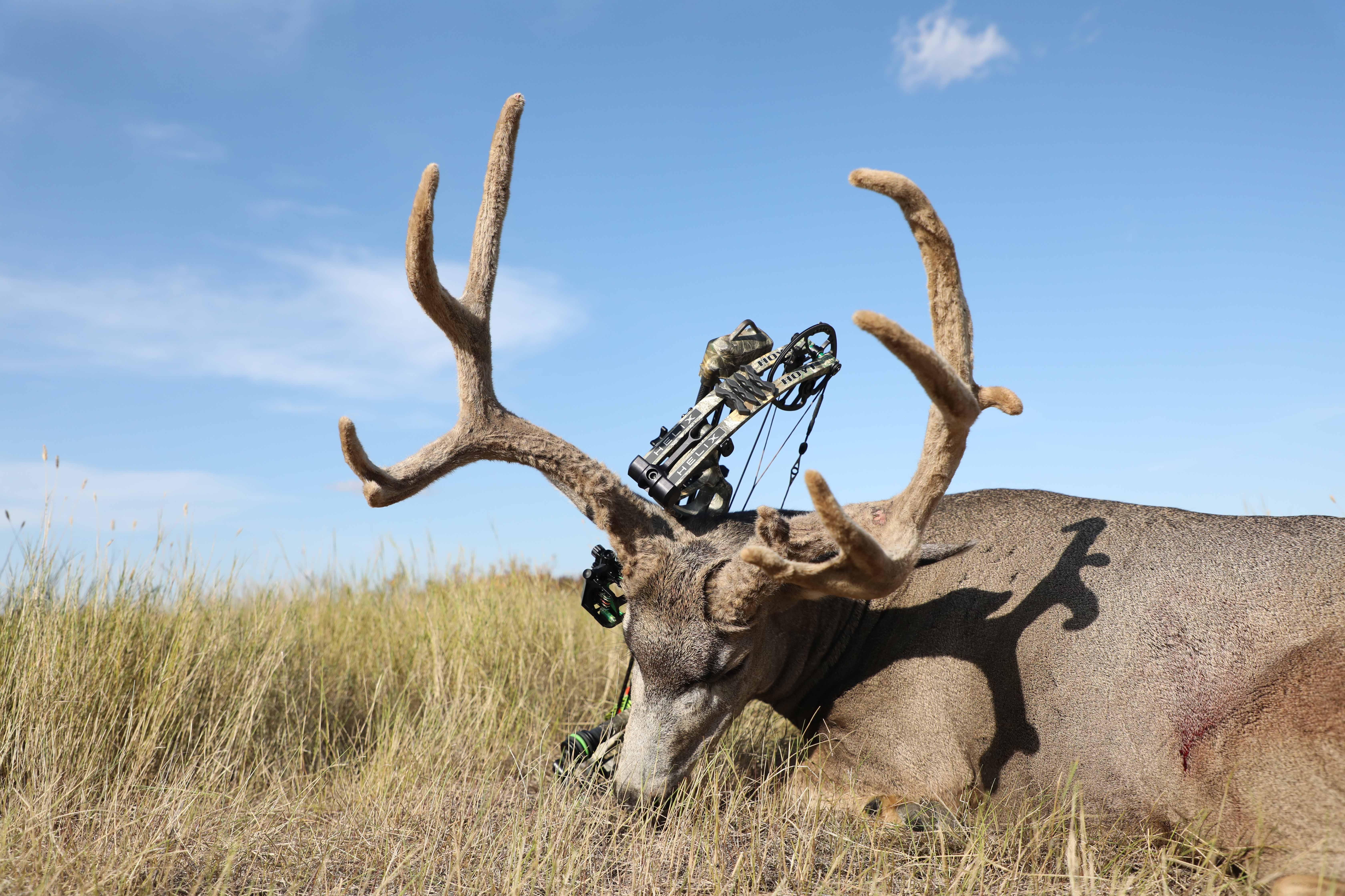 dead deer antlers